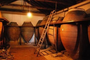 Winetrip from Madrid